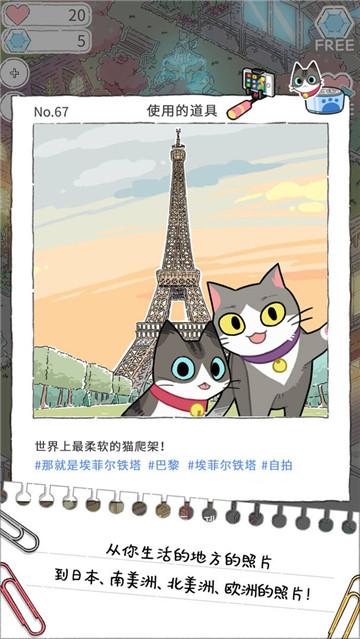 猫友圈猫咪的旅行